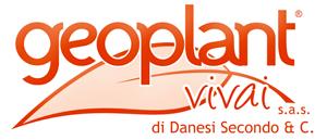 Zampe di Asparagi-Geoplant Vivai